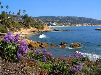 Beautiful wildflowers laguna beach california for Pretty beaches in california